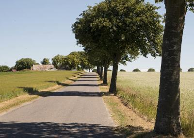 Sommer på Møn_landskab_vej